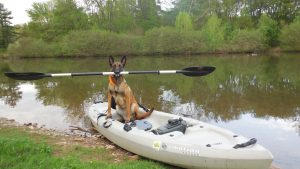 German sheppard in kayak holding paddle