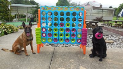 dogs playing connect 4 dog game