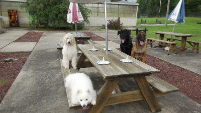 four dogs sitting at picnic table