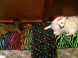 white & german sheppard puppies