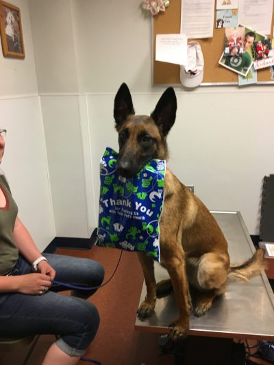 german sheppard holding thank you banner