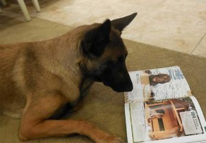 k9 institute dog reading magazine
