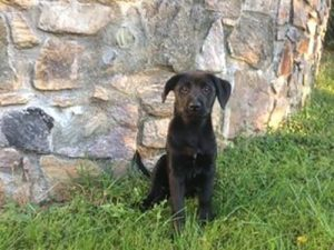 black puppy by stone wall