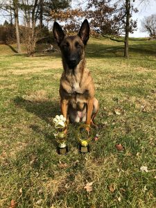 dog posing with two awards